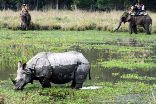 Tourists riding on elephants look at a rhinoceros at Pobitora wildlife sanctuary, east of Guwahati on November 2, 2012