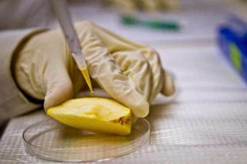Toxic nanoparticles might be entering human food supply
