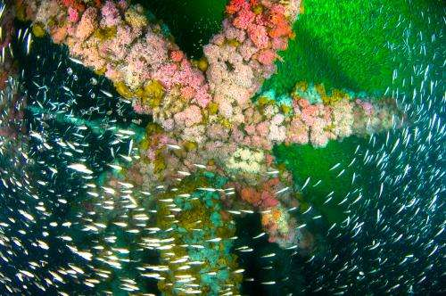 UCSB study examines heavy metal pollutants in fish at oil platforms and natural sites