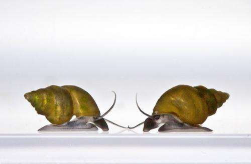 UI biology professor finds 'Goldilocks' effect in snail populations
