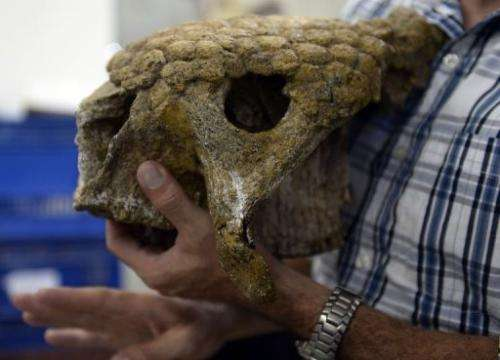 Venezuelan paleontologist Ascanio Rincon shows the skull of a glyptodont found in Caracas, Venezuela on August, 30, 2013