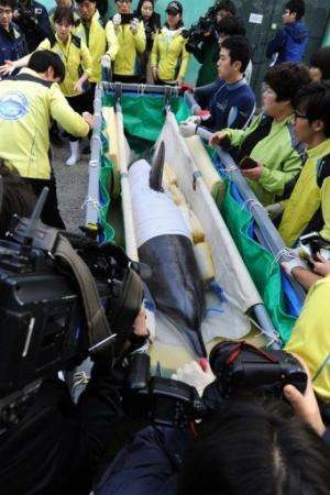 """Veterinarians and zoo keepers prepare the dolphin called """"Jedol"""" (C) for transport at Seoul Grand Park Zoo, May 11, 20"""