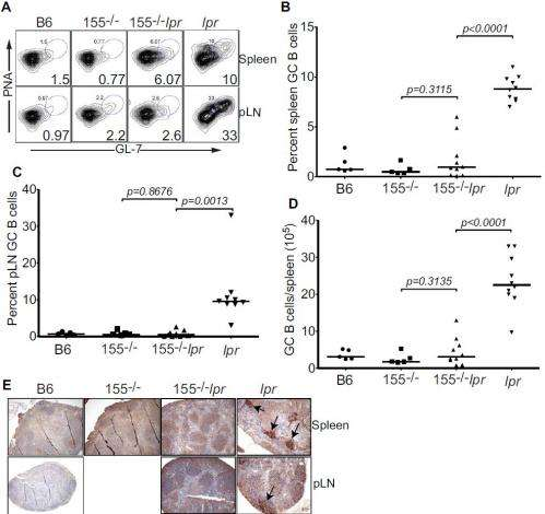 Molecular mitigation: Deleting microRNA-155 reduces autoimmune response