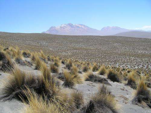 Warming will disturb balance of soil nutrients in drylands