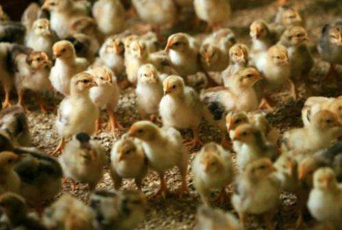 Weaker chicks are often kicked out of the nest by siblings, scientists say