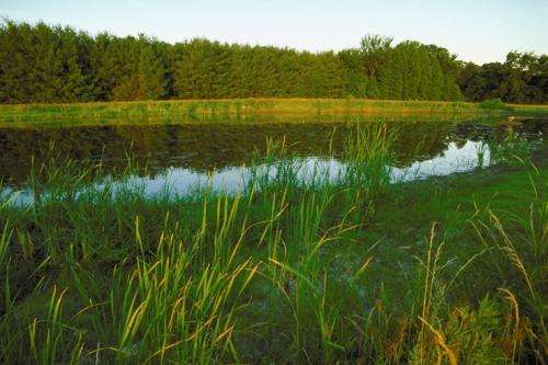 Wetlands more cost-effective in nutrient removal, but multiple payments would be of uncertain value