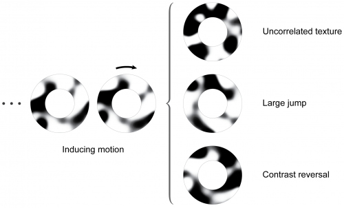 Motion perception revisited: High Phi effect challenges established motion perception assumptions