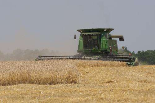 Wheat research indicates rise in mean temperature would cut yields