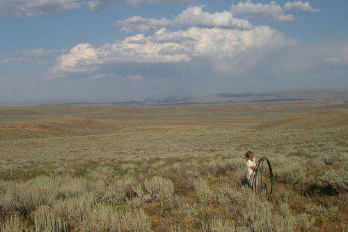 Why the Sagebrush Grows