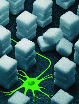 Worm research: Right combination of sugars regulates brain development