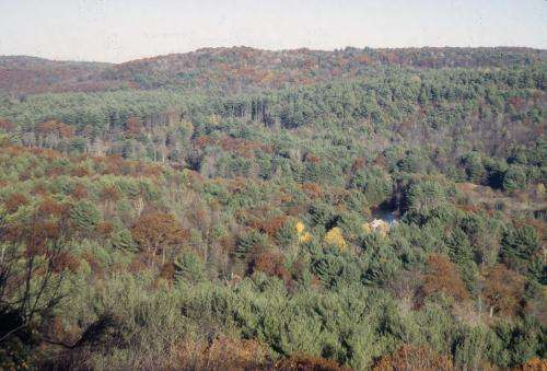 Northeastern US forests transformed by human activity over 400 years