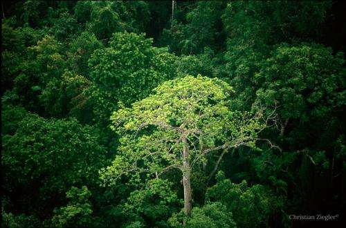 Young tropical forests contribute little to biodiversity conservation
