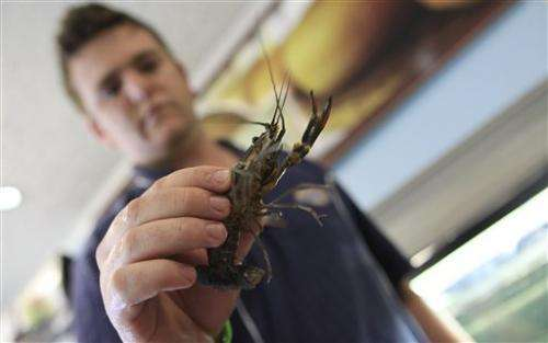 Zimbabwe faces crayfish crisis in water ecosystem