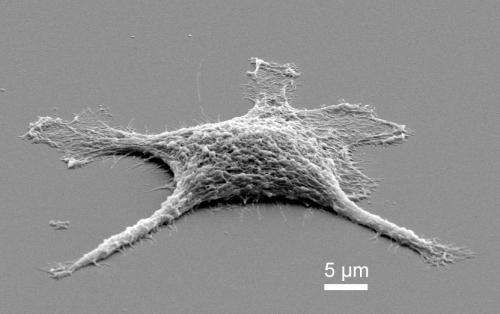 'Zombie' replica cells may outperform live ones as catalysts and conductors