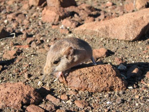 221 new species described by the California Academy of Sciences in 2014