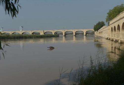 A blind dolphin swims in the Indus river in the southern Pakistani city of Sukkur on September 13, 2014