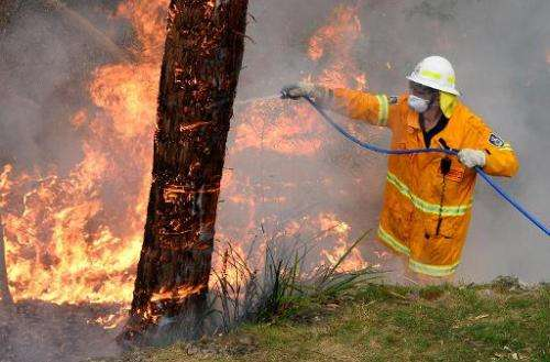 A firefighter attempts to contain wildfires in the Blue Mountains on October 22, 2013 during Australia's hottest year on record
