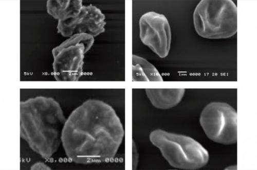 An easier way to manipulate malaria genes