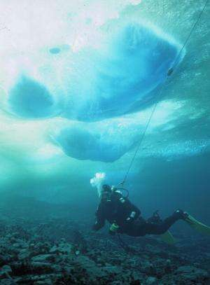 Antarctic species dwindle as icebergs batter shores year-round