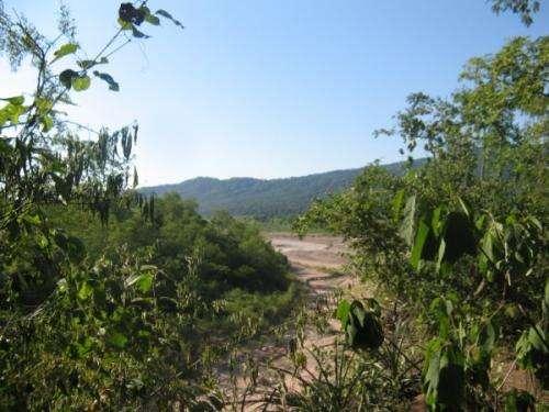 Argentina yields 3 new tarantula species