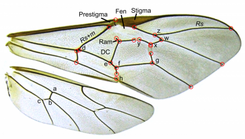 A taxonomic toolkit ends a century of neglect for a genus of parasitic wasps