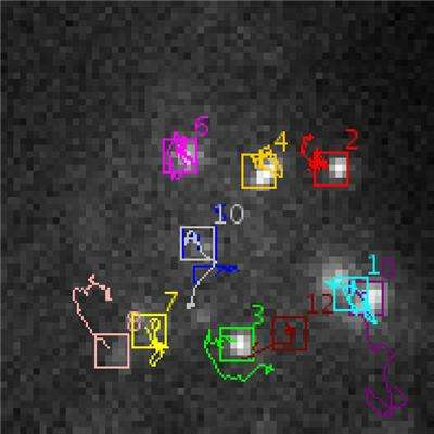 Automatic tracking of biological particles in cell microscopy images