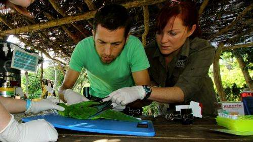 'Avian AIDS' virus poses threat to endangered New Caledonian parrots