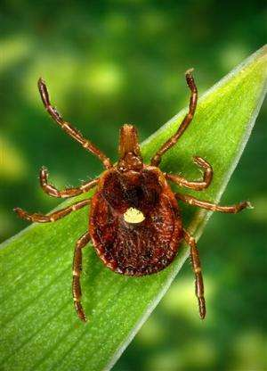 Bad bite: A tick can make you allergic to red meat