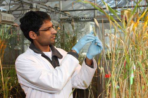 Biochemical pathways may be key to scab resistance