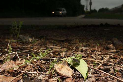 Car detour lets toads cross road without croaking
