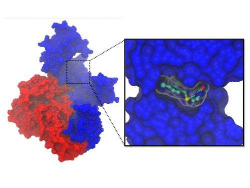 Computing a cure for HIV
