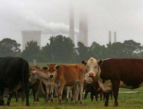 Cows graze in the shadow of the coal fired Chalk Point Generating Station, on May 29, 2014 in Benedict, Maryland