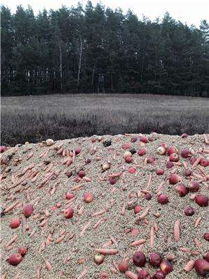 Deer feeding puts birds at risk