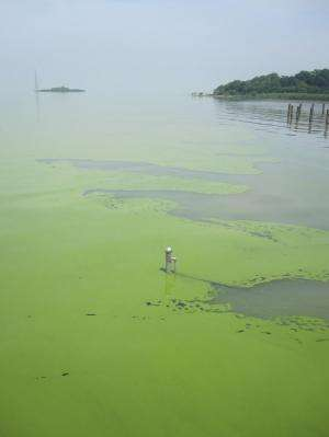 DRI expands Chinese partnership to address water pollution, management issues