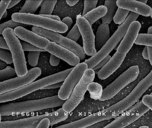e coli