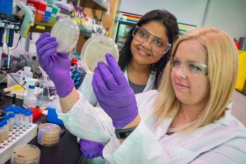 Engineered for tolerance, bacteria pump out higher quantity of renewable gasoline
