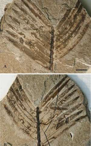 Exceptionally well preserved insect fossils from the Rhône Valley