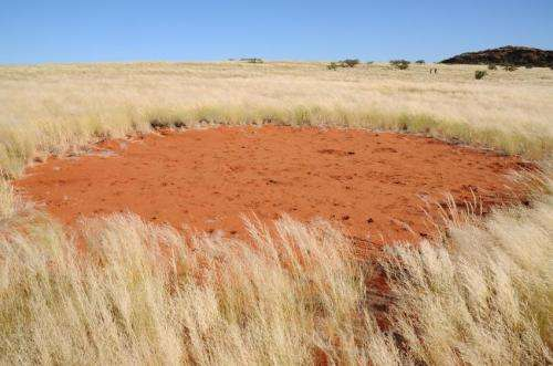 Fairy circles apparently not created by termites after all