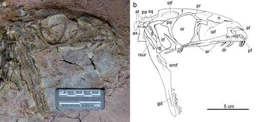 First asian coelophysoid dinosaur discovered in Lufeng, Yunnan, China
