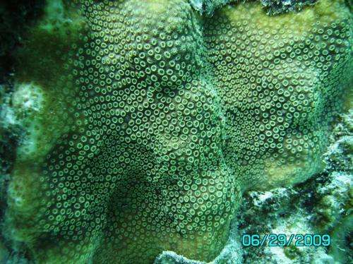 For corals adapting to climate change, it's survival of the fattest -- and most flexible