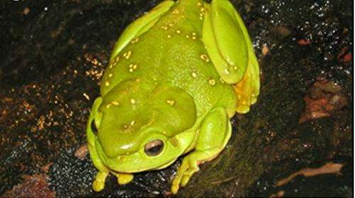 Frog tracking highlights parasite middleman