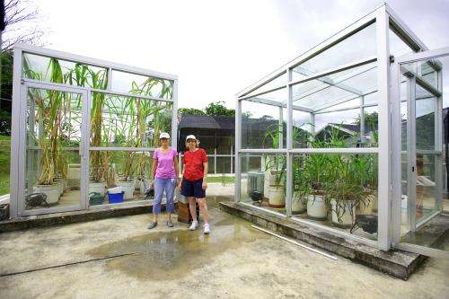 Greenhouse 'time machine' sheds light on corn domestication