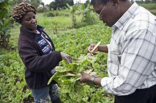 Hidden crop pest threat to poorer nations revealed