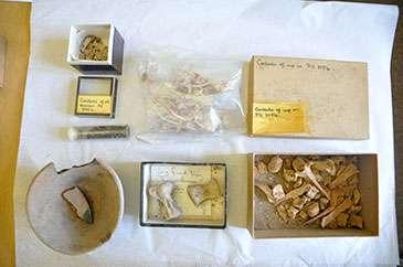 Hidden treasures of ancient Ur uncovered in Bristol