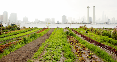 How might climate change affect our food supply?