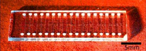 Line dancing bacteria on a chip