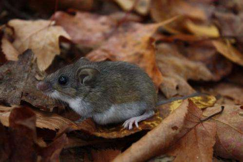 Mice give ticks a free lunch