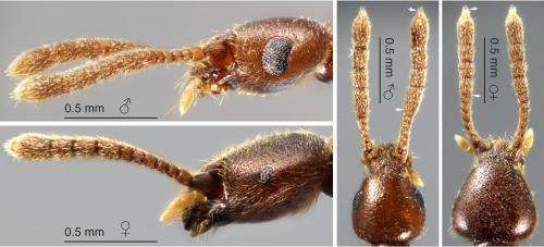 Natural History Museum, London, yields remarkable new beetle specimens from Brazil