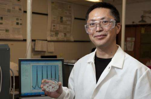 New battery technology employs multifunctional materials
