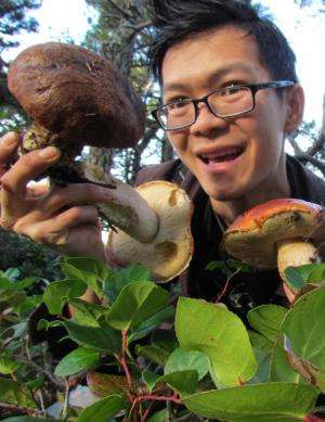 New mushroom discovered on campus is the first since 1985
